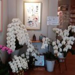 館内は胡蝶蘭でいっぱい